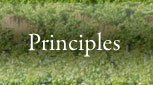 Our Principles